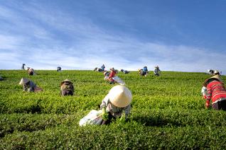 Canada Agr-Food Pilot
